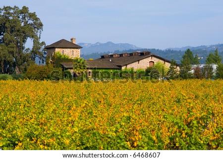 Napa Valley vineyard in Autumn - stock photo