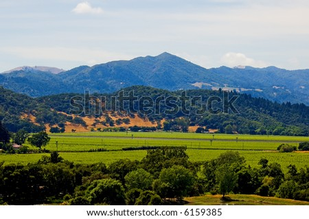 Napa Valley vineyard in California - stock photo