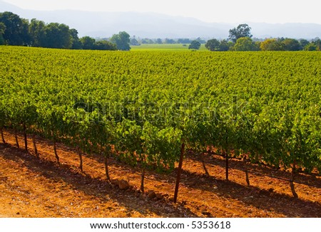 Napa Valley vineyard in California at sunset - stock photo