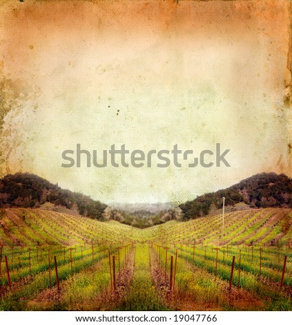 Napa Valley vineyard sunset on a grunge background. - stock photo