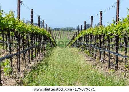 Napa Valley Vineyards in the Spring - stock photo