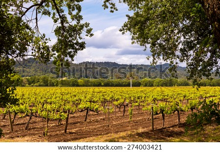 Napa Valley Vineyards, Spring, Mountains, Sky, Clouds - stock photo