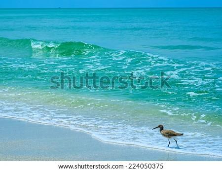 Naples Florida Tropical Beach - stock photo