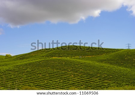 Nappa Vineyards in Summertime on an early afternoon - stock photo
