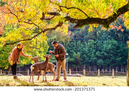 NARA, JAPAN - APRIL 21: Visitors feed wild deer on April 21, 2013 in Nara, Japan. Nara is a major tourism destination in Japan - former capita city and currently UNESCO World Heritage Site. - stock photo