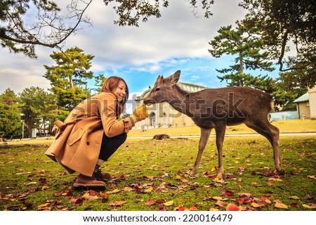 NARA, JAPAN - Nov 21: Visitors feed wild deer on April 21, 2013 in Nara, Japan. Nara is a major tourism destination in Japan - former capita city and currently UNESCO World Heritage Site. - stock photo