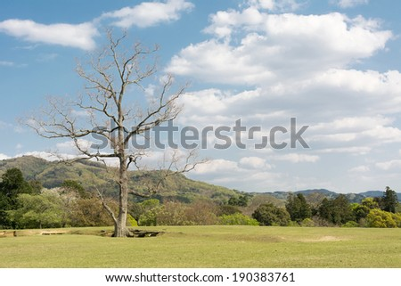 Nara park with grassland under blue sky with nobody, Japan, Asia. - stock photo