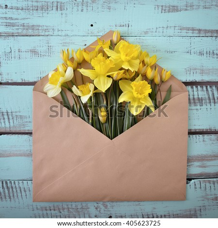 Narcissus. Envelope with spring flowers over rough obsolete wooden boards. Springtime design background. - stock photo