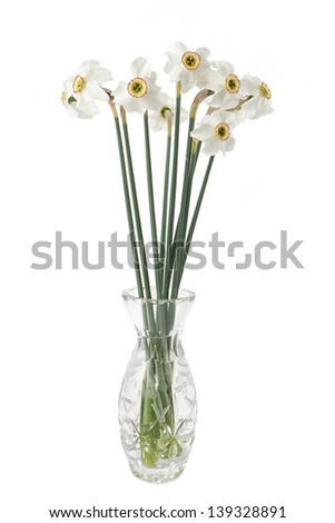 Narcissus flower in a vase on a white background