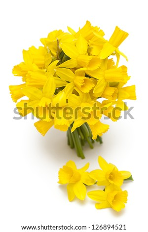 narcissus flowers isolated on white background - stock photo