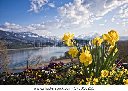 Narcissus, mountain and lake - stock photo