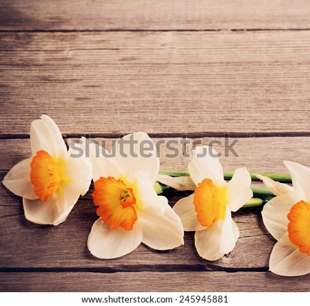 narcissus on old wooden background - stock photo