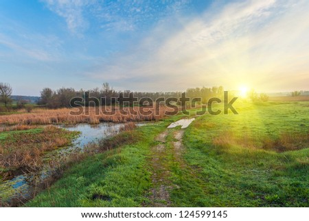 Narrow country road in the Ukraine along wetlands with yellow reeds and a fenced meadow