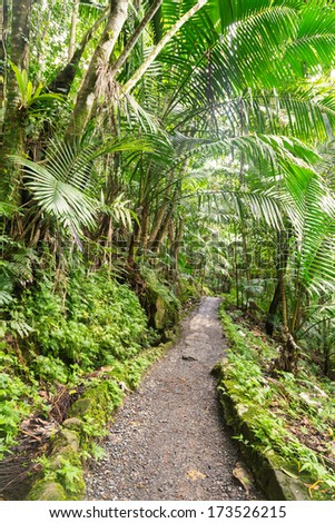 Narrow path though El Yunque tropical rainforest in Puerto Rico - stock photo