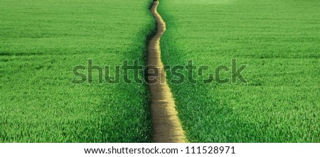 Narrow path through a field of Barley. - stock photo