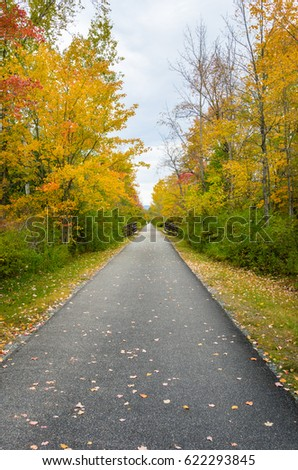 Narrow Paved Path Lined with Maple Trees in Autumn