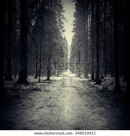 Narrow road through the dark forest at spring evening time. - stock photo