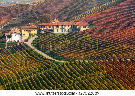 Narrow rural road and houses among colorful autumnal vineyards in Piedmont, Northern Italy. - stock photo