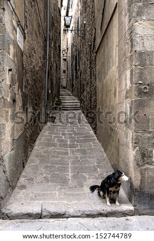 Narrow streets in Cortona with small dog, Tuscany in Italy