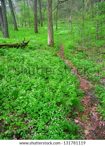 Narrow trail through understory vegetation at Apple River Canyon State Park of Illinois - stock photo