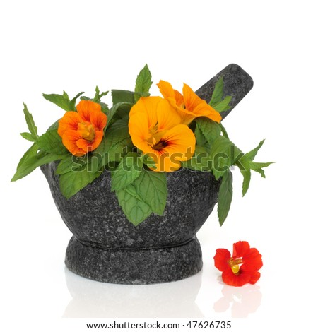 Nasturtium  flowers and mint herb leaves in a granite mortar with pestle, isolated over white background with reflection. - stock photo