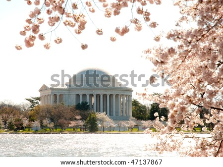 National Cherry Blossom Festival, Japanese Cherry Blossom trees, tidal basin and Jefferson Memorial - stock photo