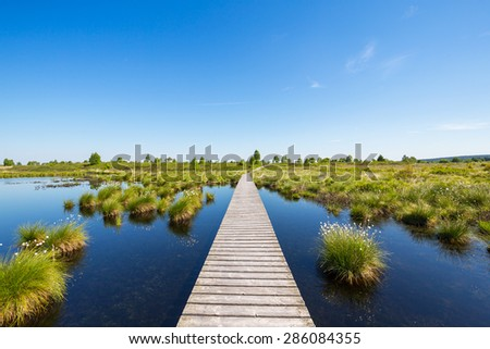 National Park Hautes Fagnes at spring, Belgium - stock photo