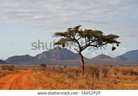 National Park Tsavo East Kenya - stock photo