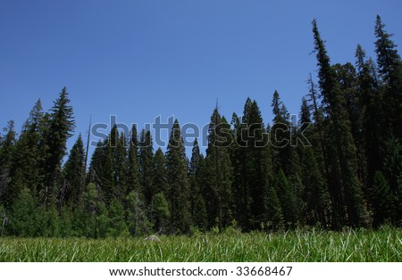 National Sequoia Park Crescent Meadow - stock photo