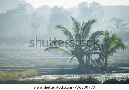 Native ferns surviving in agricultural area Asia. Misty winter morning in Thailand.