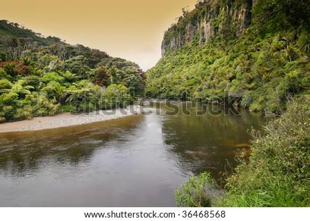 native Forest New Zealand West Coast - stock photo