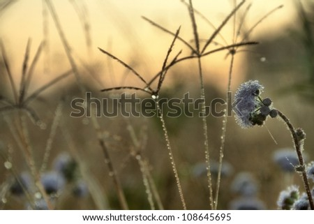 native grasses and weeds as background image from bondall wetlands brisbane - stock photo