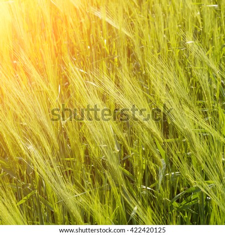 Natural abstract eco background with green fresh grass in the wind - stock photo