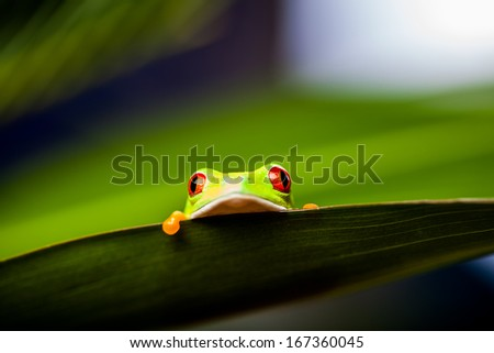 Natural and fresh colorful theme with exotic frog - stock photo
