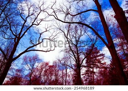 Natural Background Foliage Beauty  - stock photo