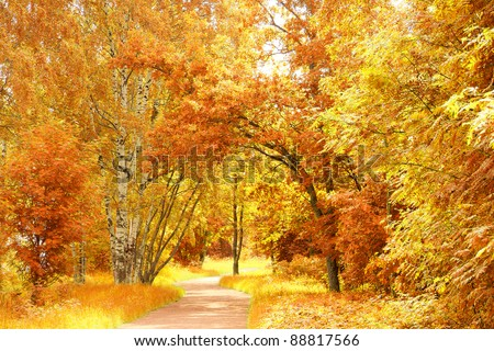 Natural Background Forest View
