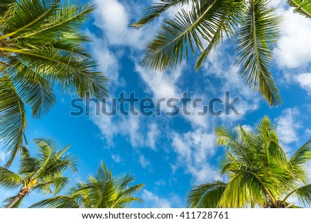 Natural  background from Boracay island with coconut palms tree leafs, blue sky and clouds  Travel Vacation - stock photo