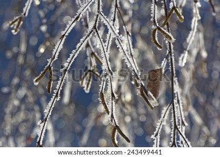 Natural background from frozen birch branches covered with hoarfrost or rime - stock photo