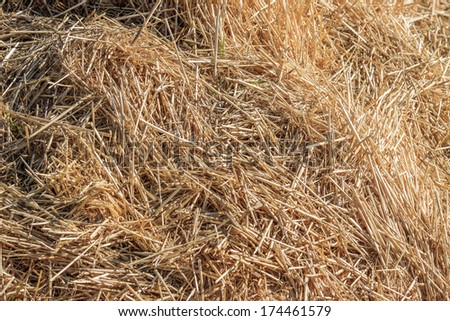 Natural  background from hay - stock photo