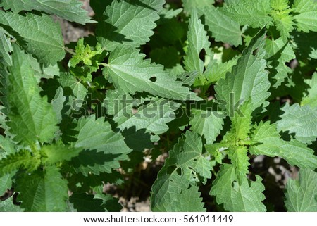 Natural background, leaves