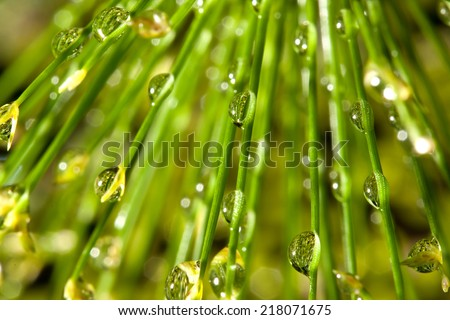Natural background of Fresh morning dew on spring grass. - stock photo