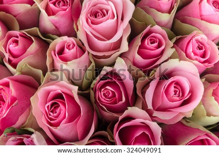 Natural background of fresh roses. Soft focus. - stock photo