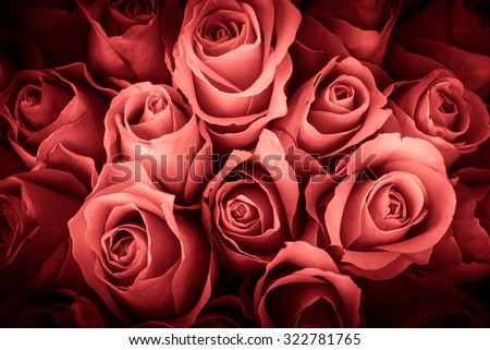 Natural background of fresh roses. Soft focus. Toned. - stock photo