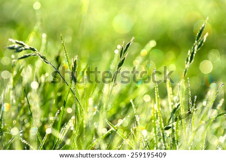 Natural background of grass with drops of morning dew - stock photo