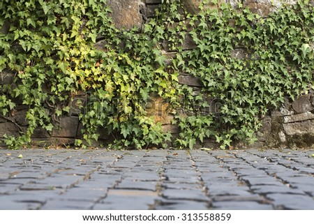 Natural background of lush fresh green beautiful climber growing on grey wall of stone blocks sunny day outdoor copyspace, horizontal picture - stock photo