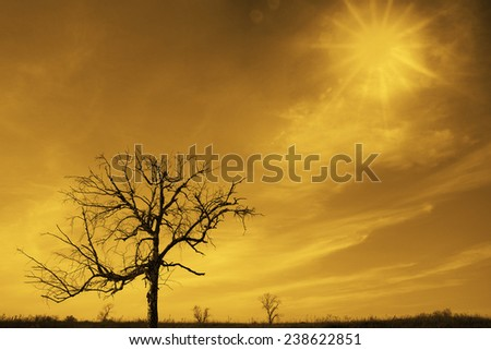 Natural Background of  ray of light breaks through the dramatic yellow sky at sunset and hit an one alone oak tree solitary Empty copy space for inscription on nature backdrop - stock photo