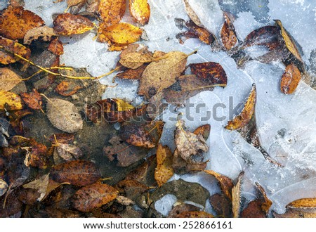 Natural background of yellow and brown tree leaves frozen in ice at cold autumn day - stock photo