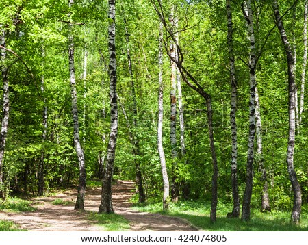 natural background - pathway in green birch forest in sunny day - stock photo