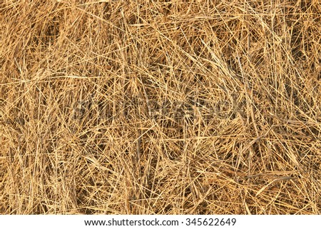 natural background. Texture dry hay closeup in yellow or brown color. Fodder for livestock and construction material. - stock photo
