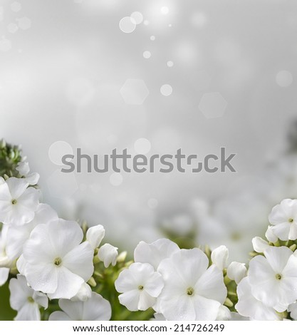 natural background with beautiful white flowers
